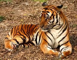 Tiger Zoo and Aquarium