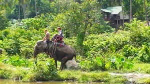 Koh Phangan - An Elephant taking a break