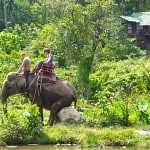 Koh Phangan Elephant Tour